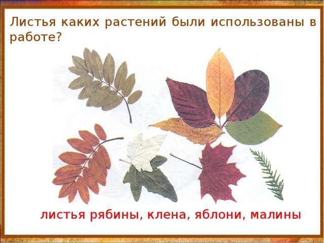 http://aida.ucoz.ru Листья каких растений были использованы в работе? листья...