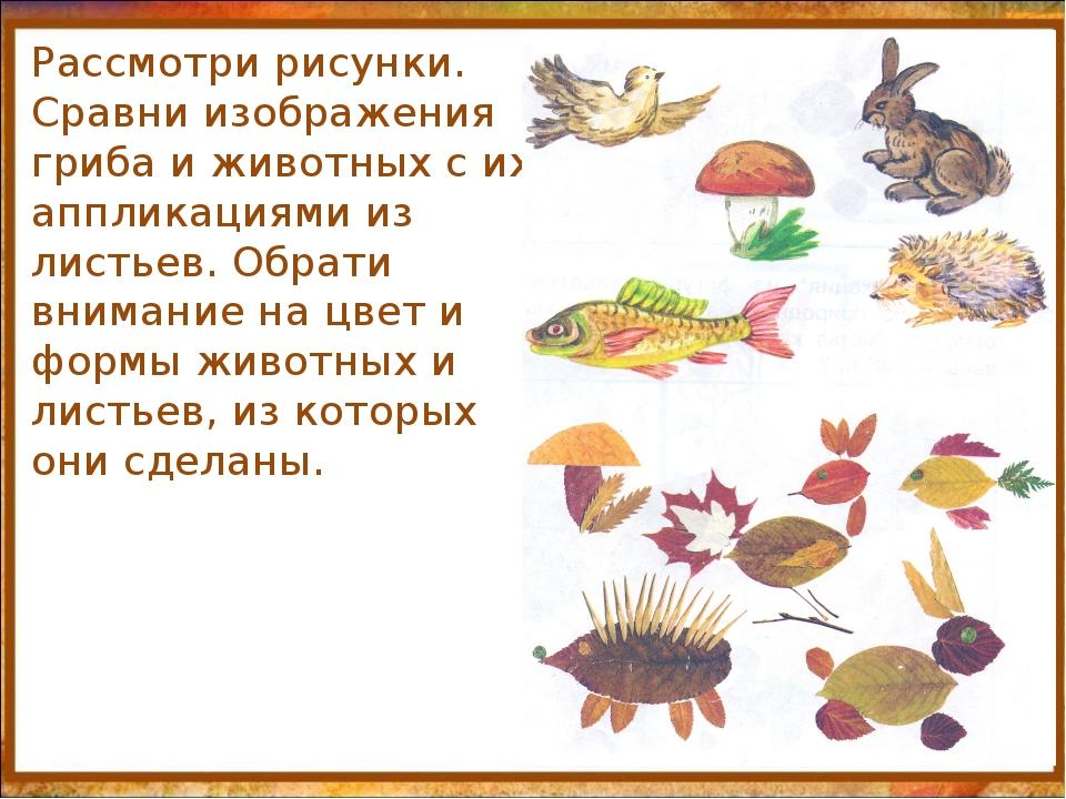 http://aida.ucoz.ru Рассмотри рисунки. Сравни изображения гриба и животных с...
