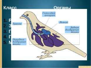 Класс Органы дыхания Рыбы Земноводные Пресмыкающиеся Птицы Млекопитающие