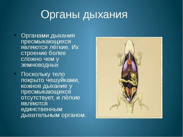Органы дыхания Органами дыхания пресмыкающихся являются лёгкие. Их строение б...