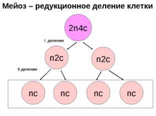 2n4с n2с nс nс n2с nс nс I деление II деление Мейоз – редукционное деление кл