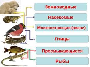 Земноводные Насекомые Млекопитающие (звери) Птицы Пресмыкающиеся Рыбы