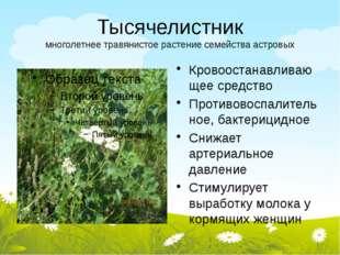 Тысячелистник многолетнее травянистое растение семейства астровых Кровоостана