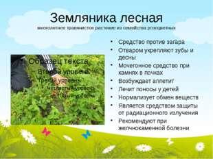 Земляника лесная многолетнее травянистое растение из семейства розоцветных Ср