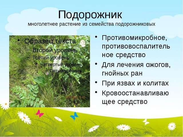 Подорожник многолетнее растение из семейства подорожниковых Противомикробное,...