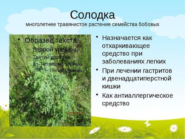 Солодка многолетнее травянистое растение семейства бобовых Назначается как от...