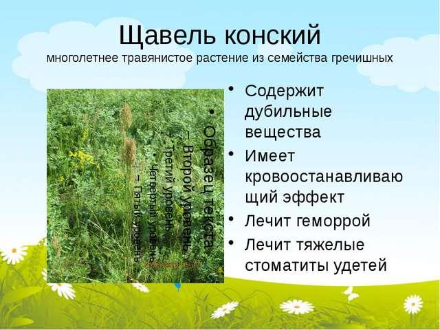 Щавель конский многолетнее травянистое растение из семейства гречишных Содерж...
