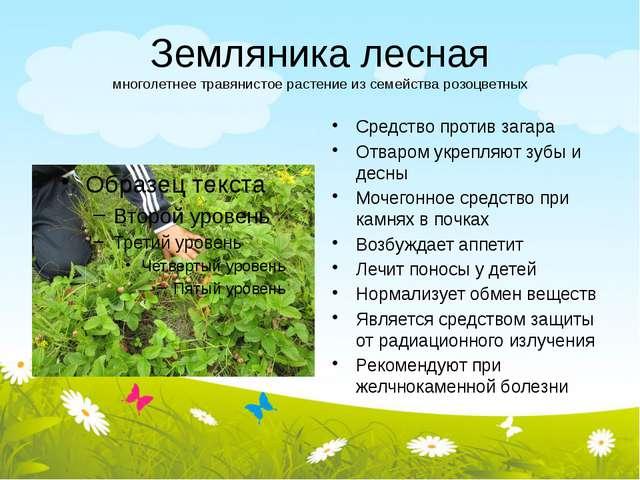 Земляника лесная многолетнее травянистое растение из семейства розоцветных Ср...