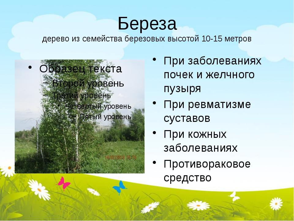 Береза дерево из семейства березовых высотой 10-15 метров При заболеваниях по...