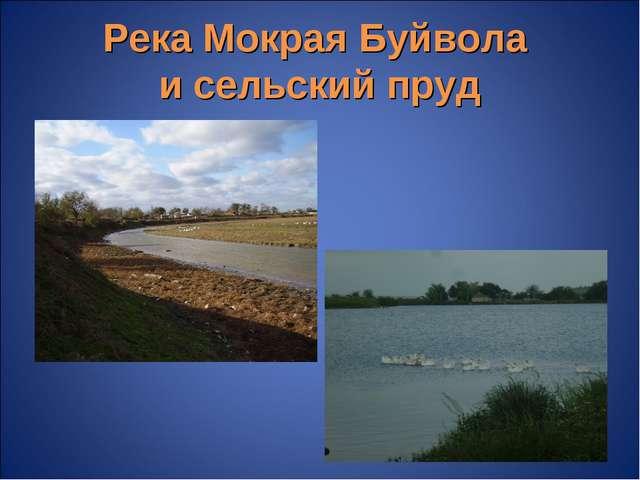 Река Мокрая Буйвола и сельский пруд