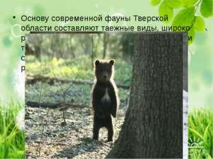 Основу современной фауны Тверской области составляют таежные виды, широко ра
