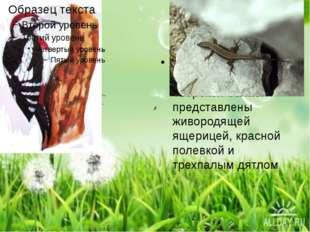 Типично таежные виды в фауне Тверской области представлены живородящей ящери