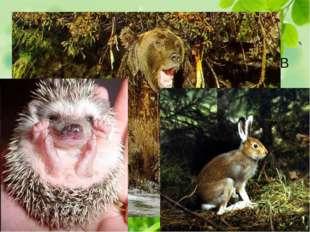 Самая многочисленная фаунистическая группа - широко распространенные лесные