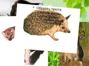 Также многочисленна группа западноевропейских видов, таких как выхухоль, лес