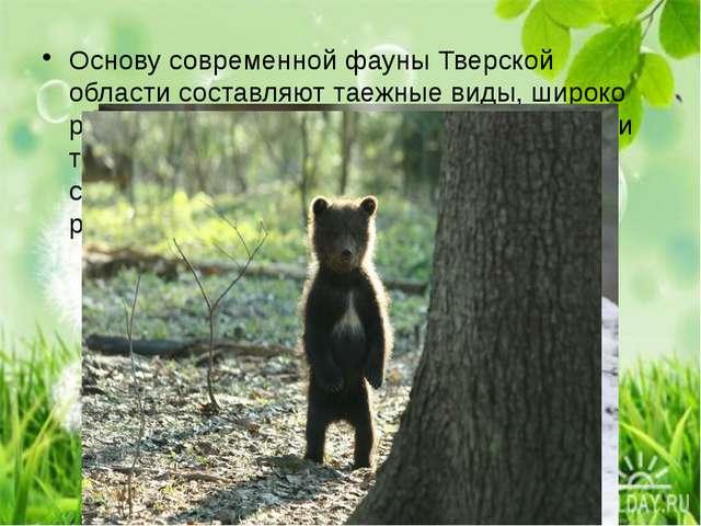 Основу современной фауны Тверской области составляют таежные виды, широко ра...