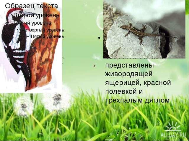 Типично таежные виды в фауне Тверской области представлены живородящей ящери...