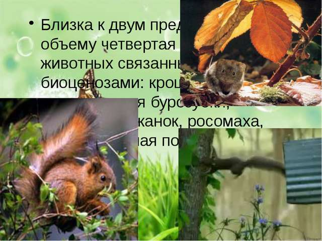 Близка к двум предыдущим по объему четвертая группа животных связанных с тае...