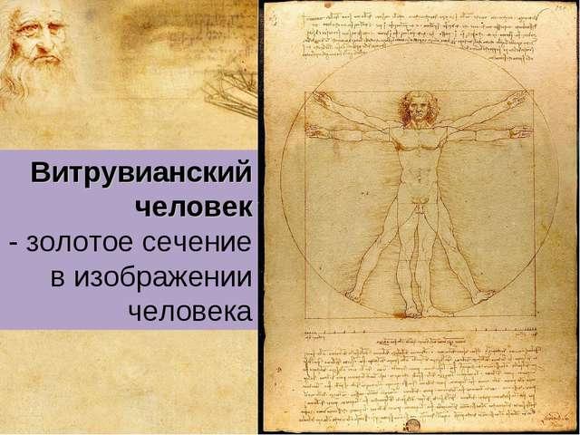 Витрувианский человек - золотое сечение в изображении человека