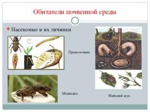 Обитатели почвенной среды Насекомые и их личинки Проволочник Майский жук Медв