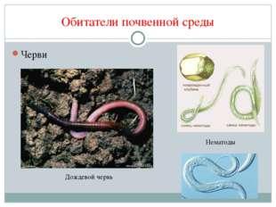 Обитатели почвенной среды Черви Дождевой червь Нематоды
