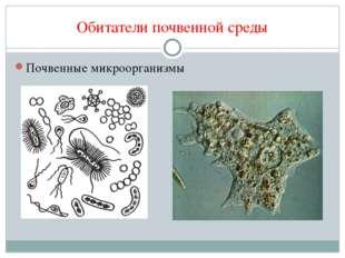 Обитатели почвенной среды Почвенные микроорганизмы