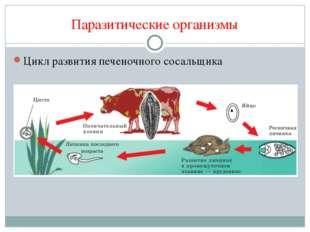 Паразитические организмы Цикл развития печеночного сосальщика