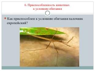 6. Приспособленность животных к условиям обитания Как приспособлен к условиям