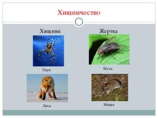 Хищничество Хищник Жертва Паук Муха Лиса Мышь