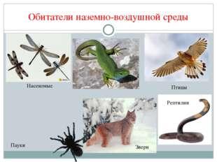 Обитатели наземно-воздушной среды р Насекомые Рептилии Птицы Звери Пауки
