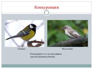 Конкуренция Конкурируют из за подходящих для гнездования убежищ Синица Мухоло