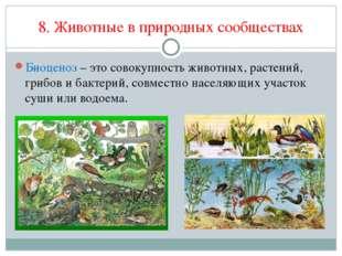 8. Животные в природных сообществах Биоценоз – это совокупность животных, рас