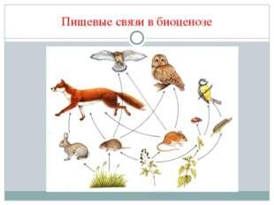 Пищевые связи в биоценозе