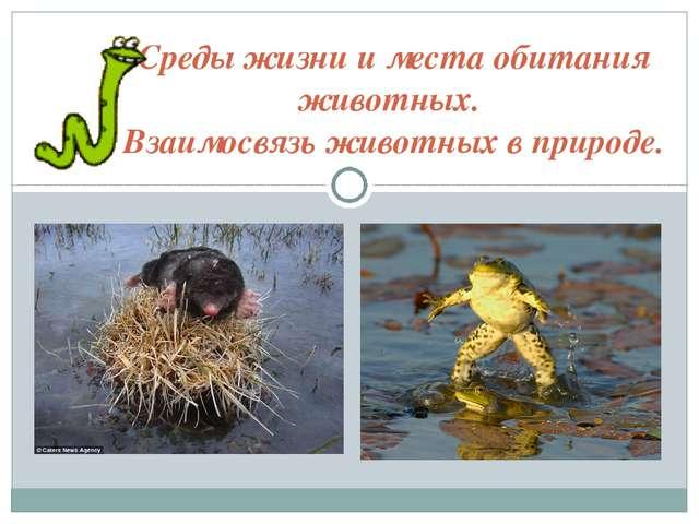 Среды жизни и места обитания животных. Взаимосвязь животных в природе.