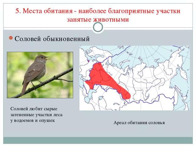 5. Места обитания - наиболее благоприятные участки занятые животными Соловей...