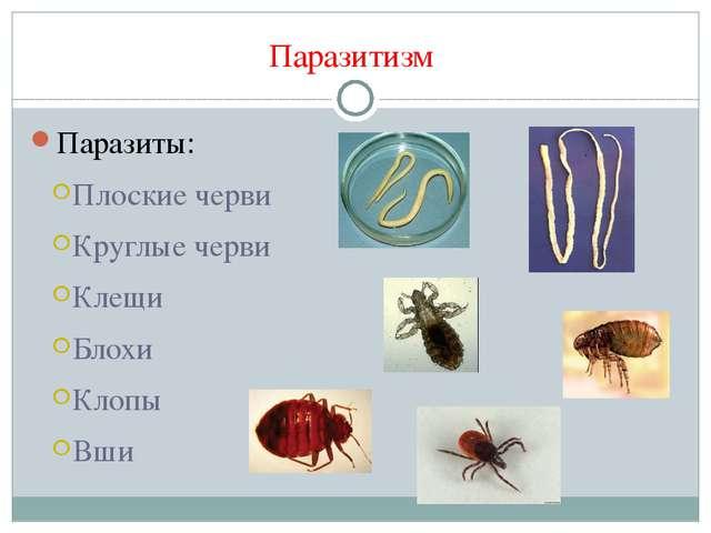 Паразитизм Паразиты: Плоские черви Круглые черви Клещи Блохи Клопы Вши