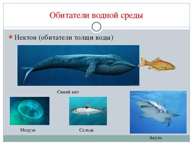Обитатели водной среды Нектон (обитатели толщи воды) Синий кит Медуза Сельдь...