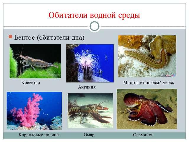 Обитатели водной среды Бентос (обитатели дна) Многощетинковый червь Креветка...
