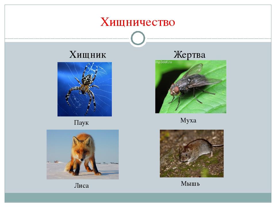 большие паразиты в организме человека