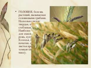 ГОЛОВНЯ, болезнь растений, вызываемая головневыми грибами. Несколько видов: