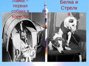 Белка и Стрелка Лайка – первая собака в космосе