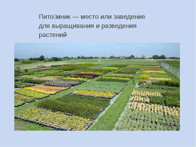 Пито́мник — место или заведение для выращивания и разведения растений