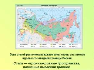 Зона степей расположена южнее зоны лесов, она тянется вдоль юго-западной гран