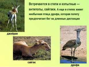 Встречаются в степи и копытные — антилопы, сайгаки. А еще в степях живет необ