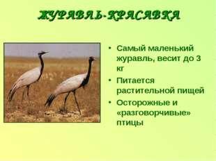 ЖУРАВЛЬ-КРАСАВКА Самый маленький журавль, весит до 3 кг Питается растительной