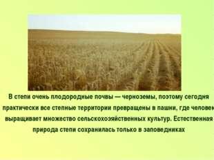В степи очень плодородные почвы — черноземы, поэтому сегодня практически все