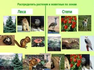 Распределить растения и животные по зонам Леса Степи