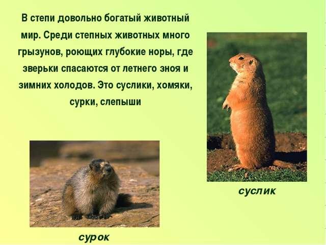 В степи довольно богатый животный мир. Среди степных животных много грызунов,...