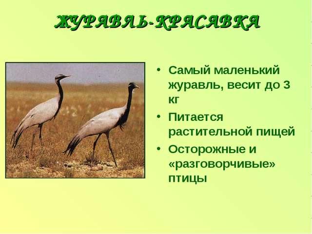 ЖУРАВЛЬ-КРАСАВКА Самый маленький журавль, весит до 3 кг Питается растительной...