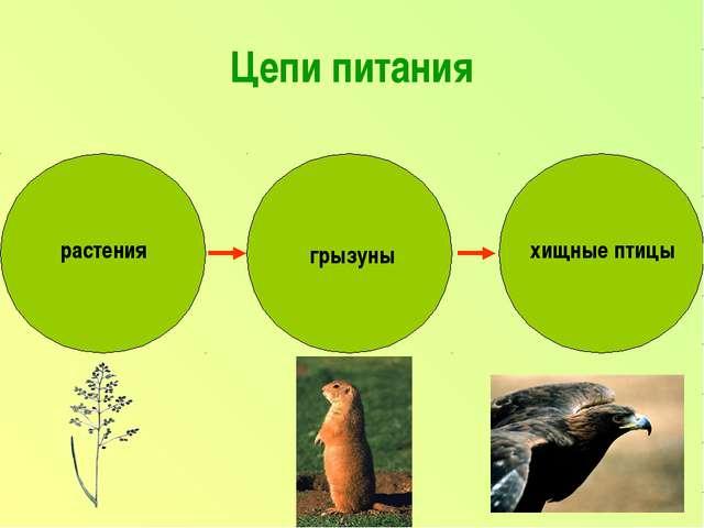 Цепи питания растения грызуны хищные птицы