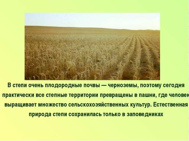 В степи очень плодородные почвы — черноземы, поэтому сегодня практически все...